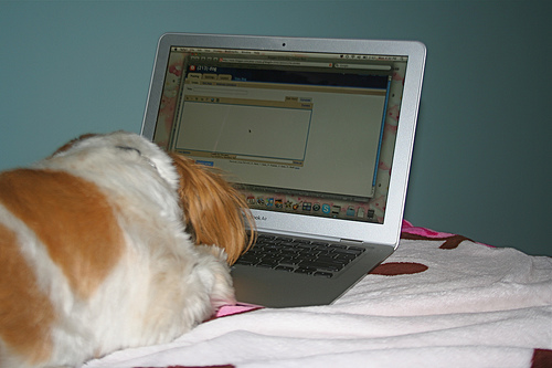 Make money blogging image